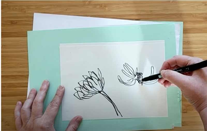 photo of hands drawing a plant