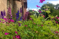 Herbaceous border at the front of Hospitalfield House in July 2015