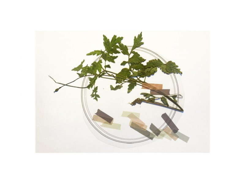 An example of Rachel Pimm's work. White paper with a digital drawing of a petri dish, a dried pressed flower and tape has been collaged on top