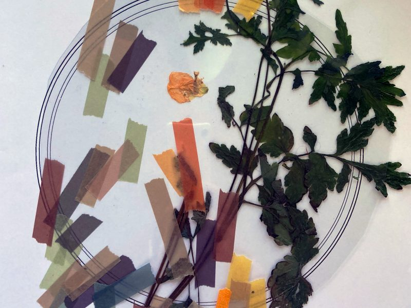 Collage of pressed flowers and tape on digital drawing of a petri dish