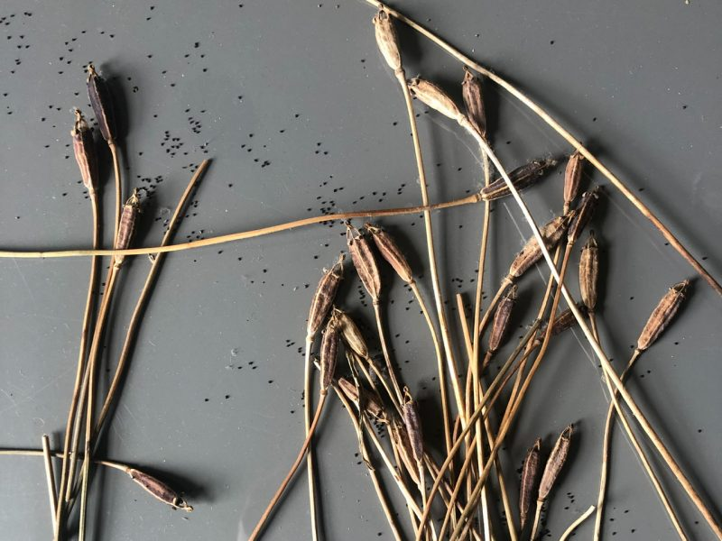 Dried plant seed heads on a grey backgroung