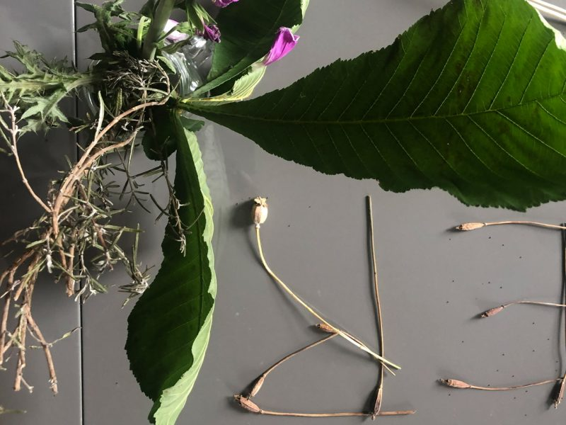 Plant materials including leaves, foxgloves and poopy heads