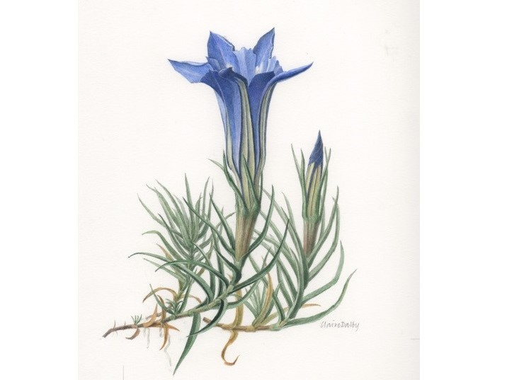 watercolour painting of a bright cup shaped flower