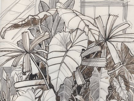 black and brown ink drawing of plants inside a glasshouse