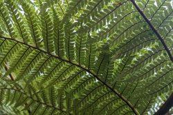 A close up of a fern leaf